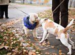Mediation bei Konflikten mit und wegen Hunden